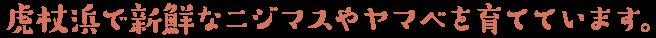 虎杖浜で新鮮なニジマスやヤマベを育てています。